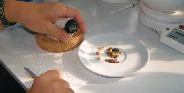 Торт Наполеон из лаваша. рецепт