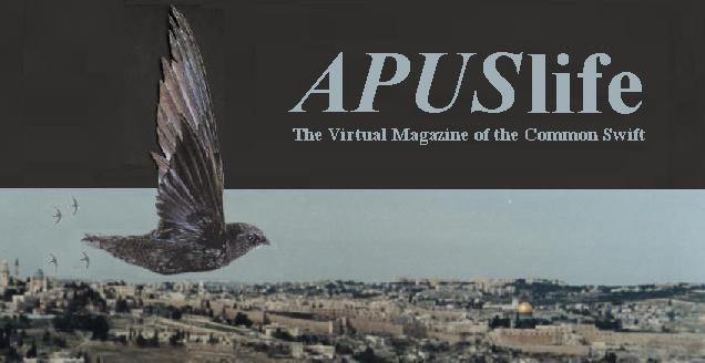 APUSlife The Virtual Magazine of the Common Swift